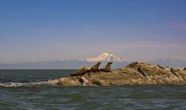 海狮和贝克山 免版税图库摄影