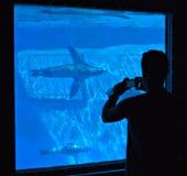 海狮在巴塞罗那的动物园里 免版税库存照片