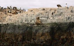海狮海岛 库存图片