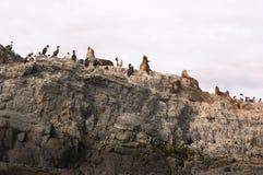 海狮海岛 免版税库存图片