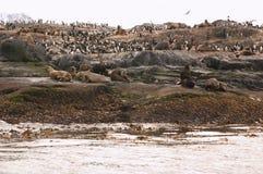 海狮海岛 免版税库存照片