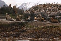 海狮海岛 库存照片