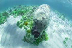 海狮 图库摄影