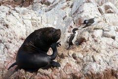 海狮 库存照片