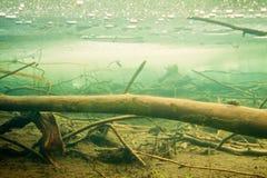 海狸冻结的冰池塘凹下去的下面木头 库存照片