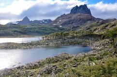 海狸和海狸水坝做的损伤在Dientes de Navarino, Isla Navarino,智利 库存图片