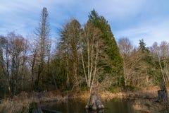 海狸池塘,失去的河路,伍德斯托克NH 03262 库存照片