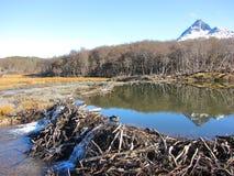 海狸水坝-乌斯怀亚 库存照片