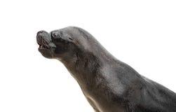 2海狼 免版税库存图片