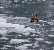 海獭和小狗 免版税图库摄影