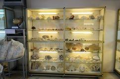 海生动物在博物馆 免版税库存图片