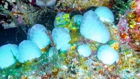海白色海绵水中,马尔代夫 库存图片