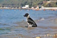 海的悲伤狗 免版税库存照片