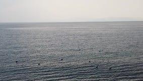 海的慢动作射击有浮动海鸥的 股票视频
