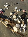 海的提供 免版税库存照片