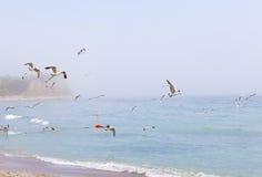 从黑海的明信片 库存图片