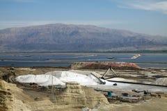 死海的植物 免版税库存照片