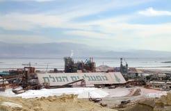 死海的植物 库存图片