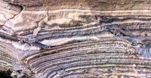 死海的泥 免版税库存照片