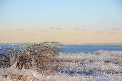 海的海岸在冬天 库存图片