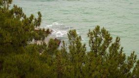 海的海岸在杉木森林附近的 股票录像