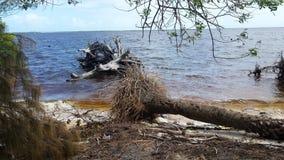 海的漂流木头 免版税图库摄影