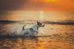 海的狗 跳跃,日落,火 免版税库存图片