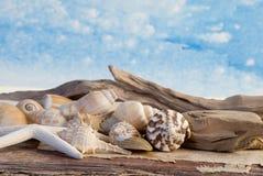 海的生活仍然 免版税库存照片