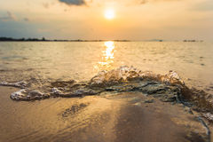 海的生活 库存图片