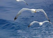 海的监护人 库存照片