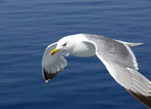 海的监护人 库存图片