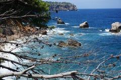 海的看法通过杉木分支 免版税库存图片