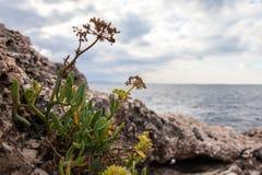 海的背景的植物 库存图片