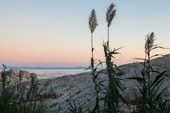 海的背景的植物 免版税库存照片