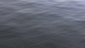 海的蓝色码头 股票录像
