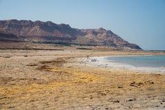 死海的视图 库存图片