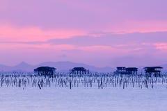 海种田在南泰国的,暮色天空背景 库存图片