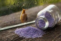 海腌制槽用食盐 淡紫色气味 库存照片