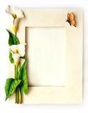 海芋属植物花开花空白框架的百合 免版税库存照片