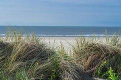 海草、海滩和沙丘 免版税库存图片