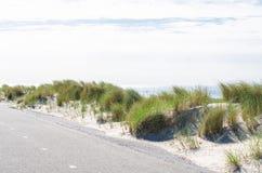 海草、海滩和沙丘 免版税图库摄影