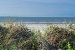 海草、海滩和沙丘 库存图片