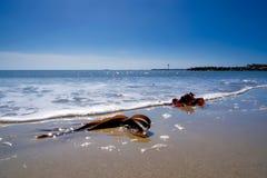 海草和孑然 免版税图库摄影