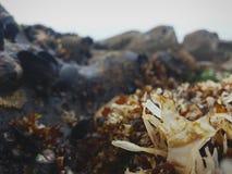 海草和海洋生物在岩石和盐水之间 图库摄影