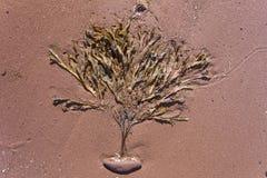 海草喜欢在红色沙滩的一棵树 库存图片