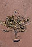 海草喜欢在红色沙滩的一棵树 免版税库存照片