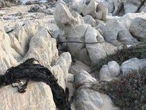 海草在岩石烘干了在潮汐变动以后 免版税图库摄影