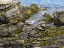 海草海岸线 库存照片