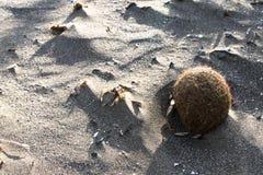 海草球在海滩的 免版税库存照片