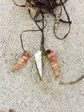 海草项链 库存照片